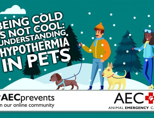 Being Cold is Not Cool: Understanding Hypothermia in Pets