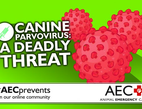 Canine Parvovirus: A Deadly Threat