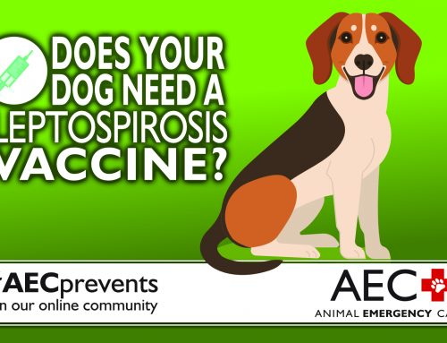 Does Your Dog Need a Leptospirosis Vaccine?