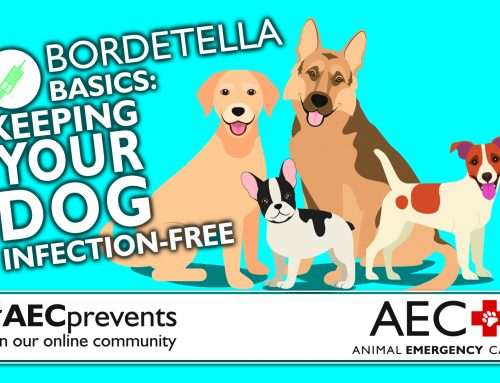 Bordetella Basics: Keeping Your Dog Infection-Free