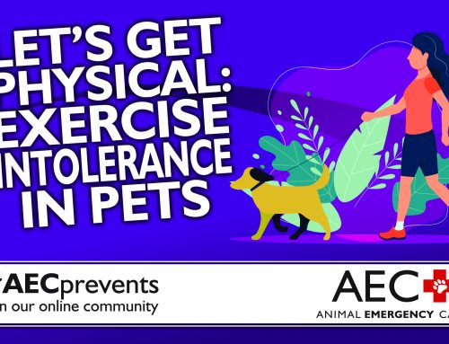 Let's Get Physical: Exercise Intolerance in Pets