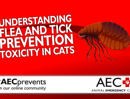 Pet Poison Prevention: Understanding Flea and Tick Preventive Toxicity in Cats