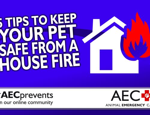 5 Tips to Keep Your Pet Safe from a House Fire