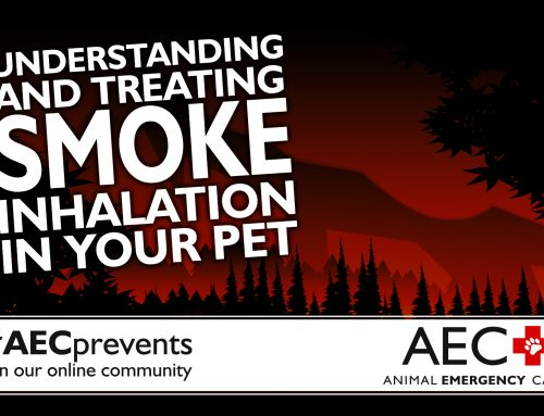 Understanding and Treating Smoke Inhalation in Your Pet