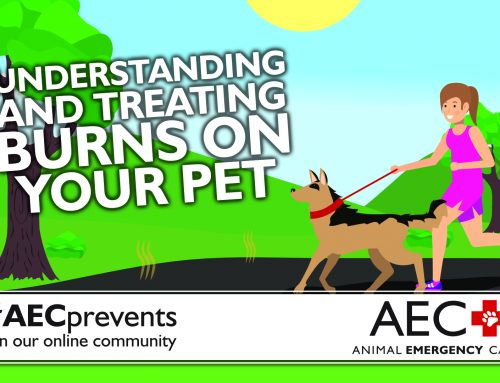 Understanding and Treating Burns on Your Pet