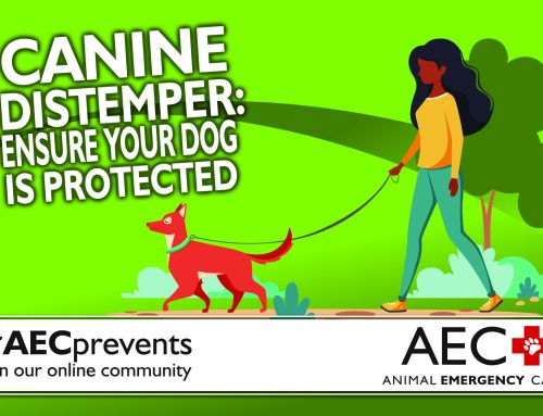 Canine Distemper: Ensure Your Dog is Protected
