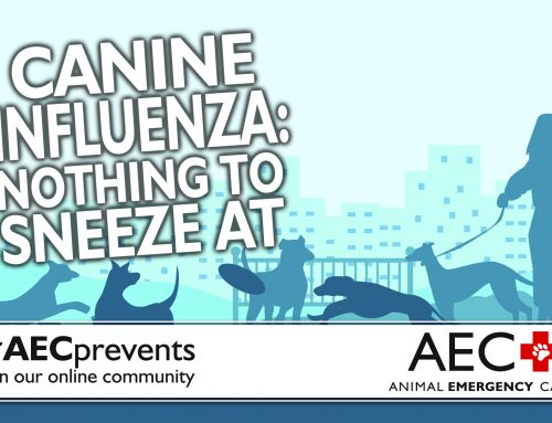 Canine Influenza: Nothing to Sneeze At