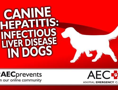 Canine Hepatitis: Infectious Liver Disease in Dogs