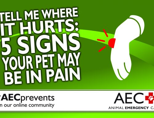 Tell Me Where It Hurts: 5 Signs Your Pet May Be in Pain