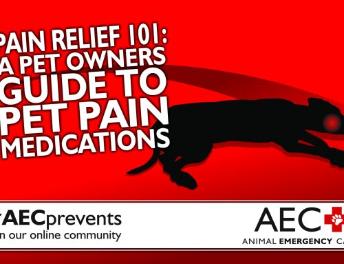 Pain Relief 101: A Pet Owner's Guide to Pet Pain Medications