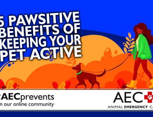 5 Pawsitive Benefits of Keeping Your Pet Active