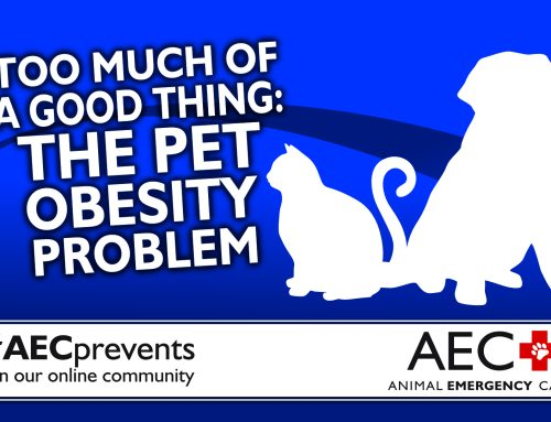 Too Much of a Good Thing: The Pet Obesity Problem