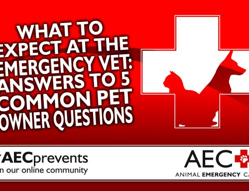 What to Expect at the Emergency Vet: 5 Common Pet Owner Questions Answered