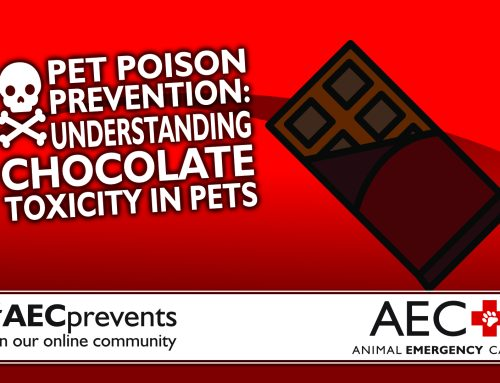 Pet Poison Prevention: Understanding Chocolate Toxicity in Pets